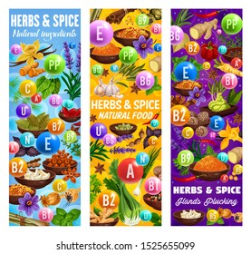 Herb and spice vitamins and minerals vector banners with food seasonings and condiments. Vanilla, cinnamon and ginger, chilli pepper, nutmeg and anise, basil, oregano and thyme, garlic and bay leaf