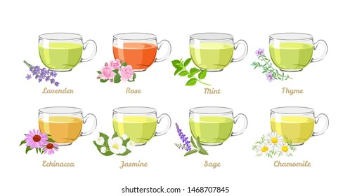 Herbal and flower teas set. Vector illustration of teas in glass cups isolated on white background. Lavender, Rose, Mint, Thyme, Echinacea, Jasmine, Sage and Chamomile drink in cartoon flat style.