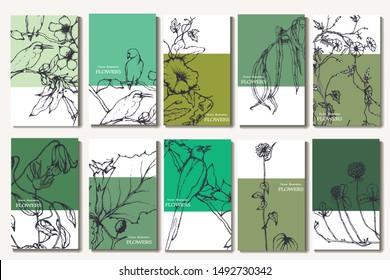Herbal illustration on label packaging design. Hand drawn vector botanic set with curly flowers and birds