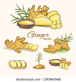 Herbal plant of ginger root plant vector illustration.