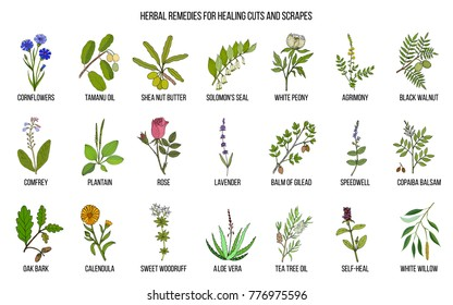 Herbal remedies for healing cuts and scrapes. Hand drawn set of medicinal herbs