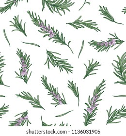 Herbal seamless pattern with rosemary sprigs on white background. Backdrop with blooming fragrant herb. Elegant vector illustration in vintage style for wrapping paper, fabric print, wallpaper