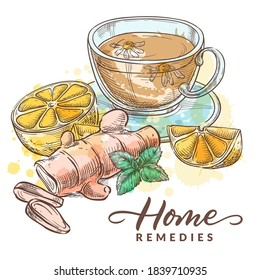 Herbal tea with chamomile, lemon, ginger and mint. Home remedies treatment and medicines for colds, flu, coughs. Vector hand drawn watercolor sketch illustration. Healthcare natural herbal therapy
