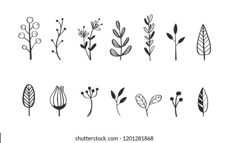 Herbal tea and floral doodle set. Vector hand drawn botanical illustration. Isolated objects on white
