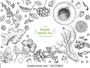 Herbal Tea shop frame vector illustration. Vector design with herbal ingredients. Hand drawn sketch collection. Engraved style.