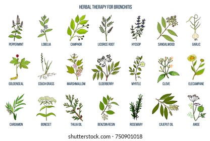 Herbal therapy for bronchitis. Hand drawn vector set of medicinal plants