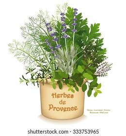 Herbes de Provence Garden Planter, aromatic cooking herbs of SW  France, Rosemary, Sweet Fennel, Flat Leaf Parsley, Thyme, Oregano, Lavender in clay flowerpot isolated on white.  EPS8 compatible.