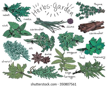 herbs, anise, basil, chervil, chives, cilantro, cinnamone, coriander, dill, mint, oregano, parsley, rosemary, rucola, rocket, sage, tarragon, thyme on the vintage background