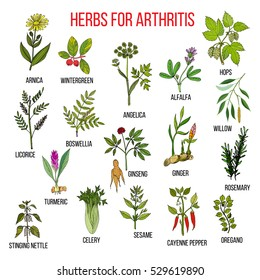 Herbs to fight arthritis: boswellia, willow, celery, ginger, arnica, wintergreen, andelica, alfalfa, hop, licorice, ginseng, rosemary, turmeric, nettle, sesame, pepper, oregano. Hand drawn vector