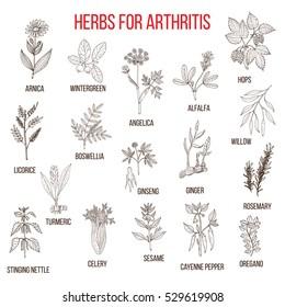 Herbs to fight arthritis: boswellia, willow, celery, ginger, arnica, wintergreen, andelica, alfalfa, hop, licorice, ginseng, rosemary, turmeric, nettle, sesame, pepper, oregano. Hand drawn vector