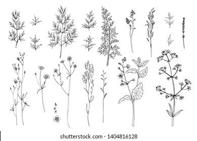 Herbs and flowers painted black line. Vector drawing. Wildflowers, fern