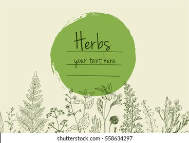 Herbs and flowers painted green line. Space for text. Vector drawing. Template with a sketch of herbs. Green color