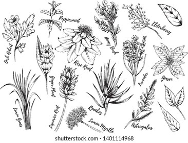 Herbs and foliage inky hand drawn vector illustrations