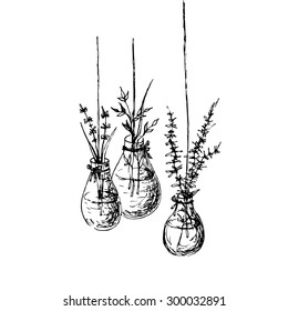 Herbs in hanging vases ink drawing. Hand drawn fast sketch with basil, hyssop and oregano in upcycled light bulb with water. Idea for Summer kitchen. Doodle style. Vector file is EPS8.