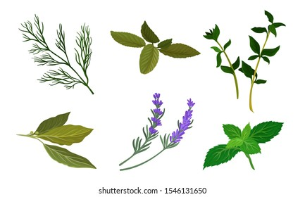 Herbs For Kitchen Vector Set. Cooking Ingredient Collection