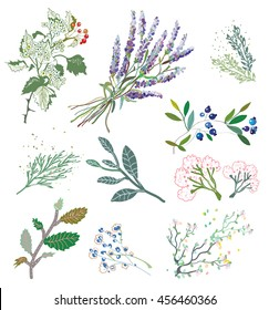Herbs and plants for herbal medicine. Vector graphic illustration.
