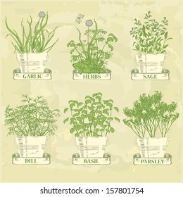 herbs in pot, garlic, parsley, dill, sage and basil, herbal vintage background
