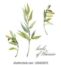 herbs of Provence on white background vector