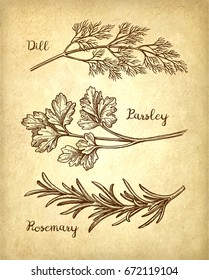 Herbs set. Old paper background. Hand drawn vector illustration. Retro style.
