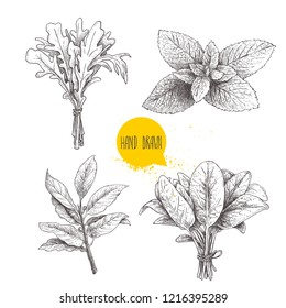 Herbs sketch set. Arugula bunch, mint leaves, basil and bay leaves. Hand drawn vector illustrations. Retro style for food design, kitchen and market. Isolated on white.