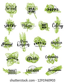 Herbs and spice icons with lettering. Vector sorrel and cilantro, poppy and savory, melissa and nutmeg, celery and fennel, green onion and parsley. Angelica and marjoram, garlic or coriander, lavender