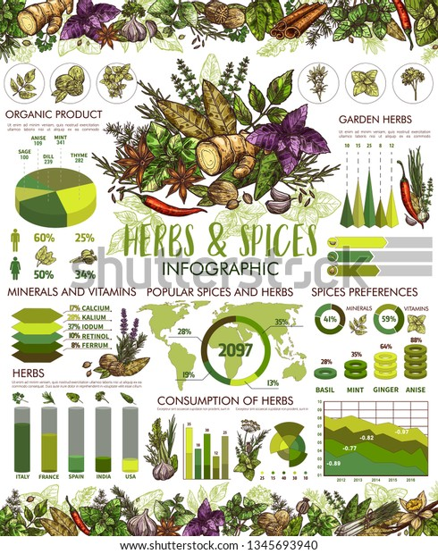 Herbs Spice Infographic Cooking Seasonings Vector Stock