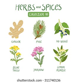 Herbs and spices collection 10. For essential oils, ayurvedic medicine