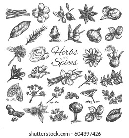 Herbs and spices collection. Vector hand drawn isolated objects on white