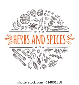 Herbs and spices concept. Hand drawn vector illustration. Round circle composition. Cinnamon, pepper, cardamon, ginger, basil, capers, thyme, oregano, barberry, juniper, saffron, coriander, bay leaf.