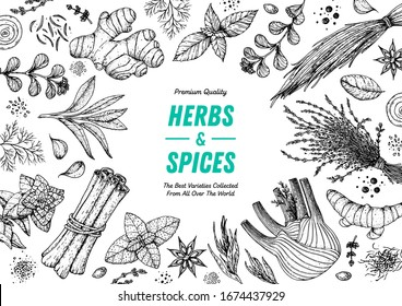 Herbs and spices hand drawn vector illustration. Aromatic plants. Hand drawn food sketch. Vintage illustration. Card design. Sketch style. Spice and herbs black and white design.