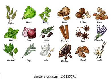Herbs. Spices. Italian herb drawn black lines on a white background. Vector illustration. Bay leaf, lettuce, parsley, mint, onion, olives, spinach, sage, garlic, Walnut, hazelnut, peanuts, cinnamon