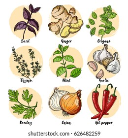 Herbs. Spices. Italian herb drawn black lines on a white background. Vector illustration. Basil, ginger, Origano, Thame, mint, garlic, parsley, onion, hot pepper