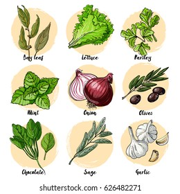 Herbs. Spices. Italian herb drawn black lines on a white background. Vector illustration. Bay leaf, lettuce, parsley, mint, onion, olives, spinach, sage, garlic