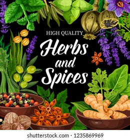 Herbs and spices poster, farm condiment or seasonings shop. Vector ginger and pepper mix, lavender and parsley, arugula and poppy, mint and bay leaf. Condiments and flavorings for cooking