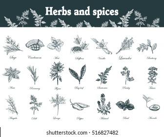 Herbs and spices set. Hand drawn officinale medicinal plants. Organic healing wild flowers. Vector botanical illustrations. Engraving floral sketches