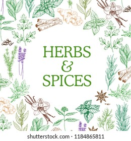 Herbs and spices sketch herbal plants. Vector seasoning and flavorings of star anise seeds, ginger or cinnamon and oregano, basil and cumin or chili pepper and cinnamon with tarragon and mint