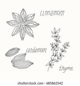 Herbs and spices sketch set. Cinnamon, cardamon, and thyme hand draw illustration.  Can be used for menu, cafe, bar, poster, wrapping paper, banner, food blog, product packaging, branding, cards.