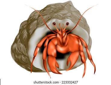 hermit crab isolated