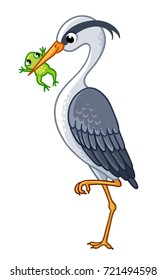 The heron in a beak holds a frog. Vector isolated heron on white background.