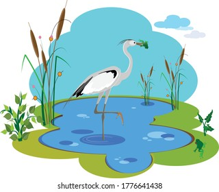 A heron bird stands on one foot in the lake water and holds a funny green frog in its beak. Vector illustration for design.