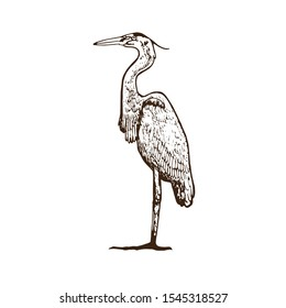 Heron standing, side view, hand drawn doodle, sketch in vintage gravure style, vector illustration