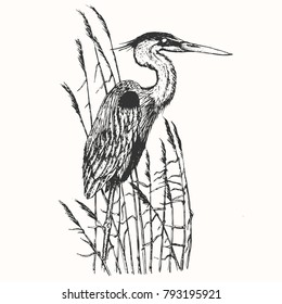 Heron in vintage engraving style. Hand drawn vector retro illustration. Template for cover, poster, banner, greeting card.
