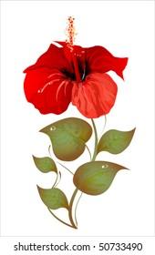 hibiscus.eps 10