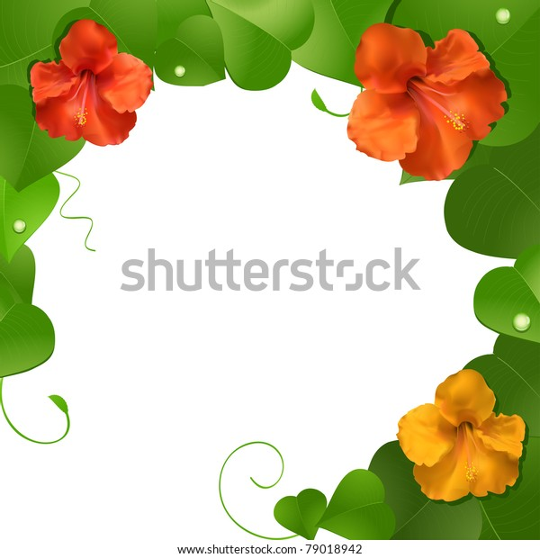 Hibiscus Flower Border Stock Vector Royalty Free 79018942