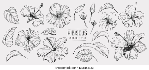 Hibiscus flower. Set of hand drawn illustration. Vector outline. Isolated