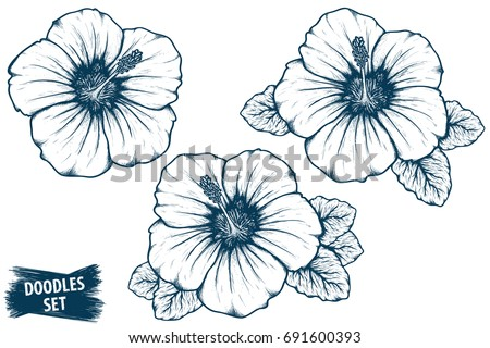 Hibiscus Flower Sketch Tropical Plant Doodle Stock Vector Royalty