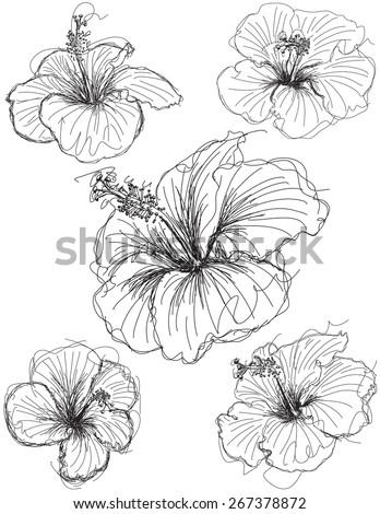 hibiscus flower sketches hand drawn hibiscus stock vector royalty