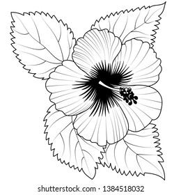 Hibiscus flower. Tropical plant doodle. Floral scrawl. Hibiscus sketch. Scribble vector. Jungle nature. Hand drawn effect petal illustration. Highly detailed hibiscus blossom and leaves drawing
