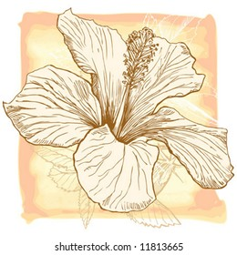 Hibiscus flower - vector hand draw