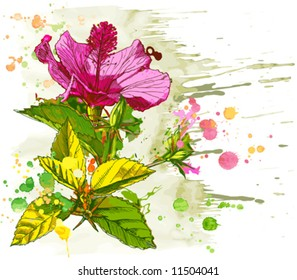 Hibiscus flower - vector watercolor paint. Elements on a separate layers